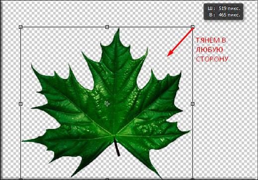 Как трансформировать объект или любое изображение в фотошопе?