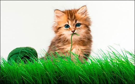 Трава на прозрачном фоне для фотошопа: картинки и пример применения